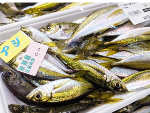 季節の魚介類